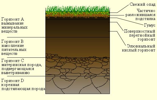 Если бы поверхность нашей Земли не была бы покрыта почвой, человек не смог бы на ней существовать.