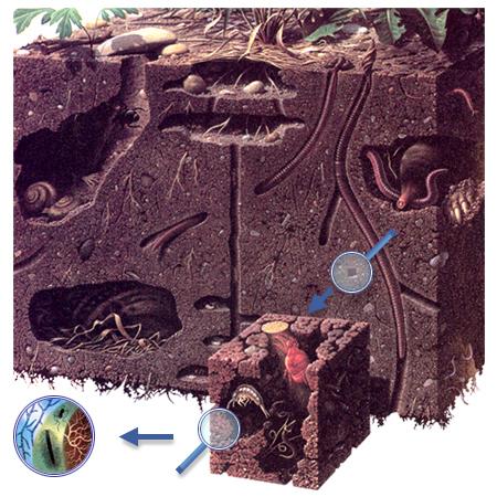 Сегодня объектом нашего изучения будет почва.