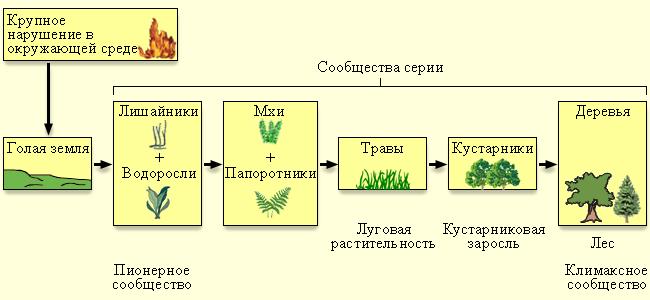 Цель сформировать представление о развитии и смене биогеоценозов